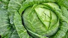 Cabbage Bodybuilding