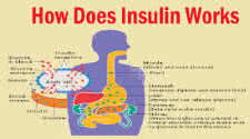 Insulin How it Works