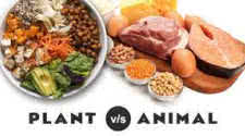 Vegetable vs Meat Protein
