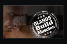 Glands Build Muscle